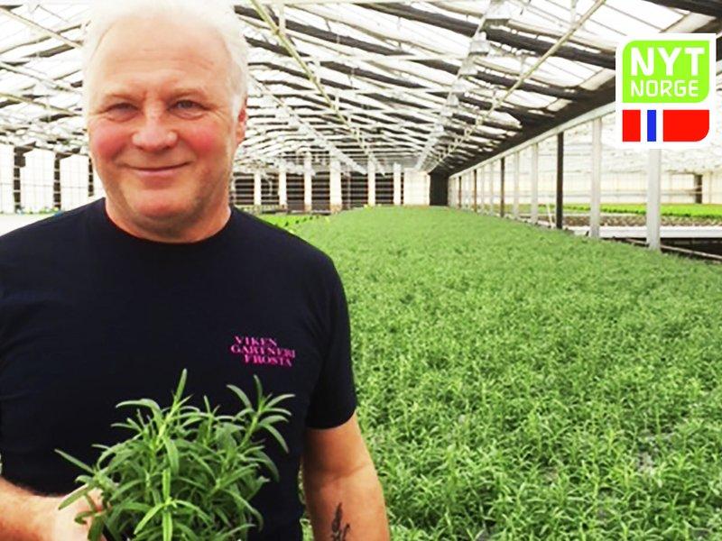 Jonas Viken fra Viken gartneri på Frosta dyrker rosmarin
