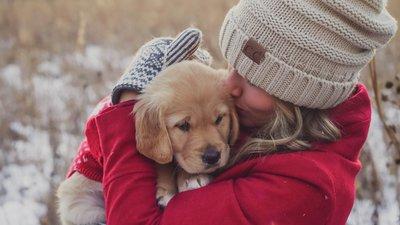Hoia oma lemmikut ka talvel - külm ja pimedus varjab endas mitmeid ohte