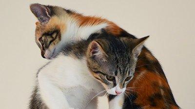 Klättrande katter