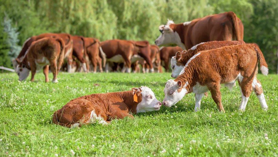 Loomakindlustus kaitseb Sinu karja: veiseid, lambaid, sigu, karusloomi ja hobuseid ootamatuste eest