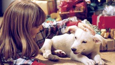 Hundvalp bland julklappar