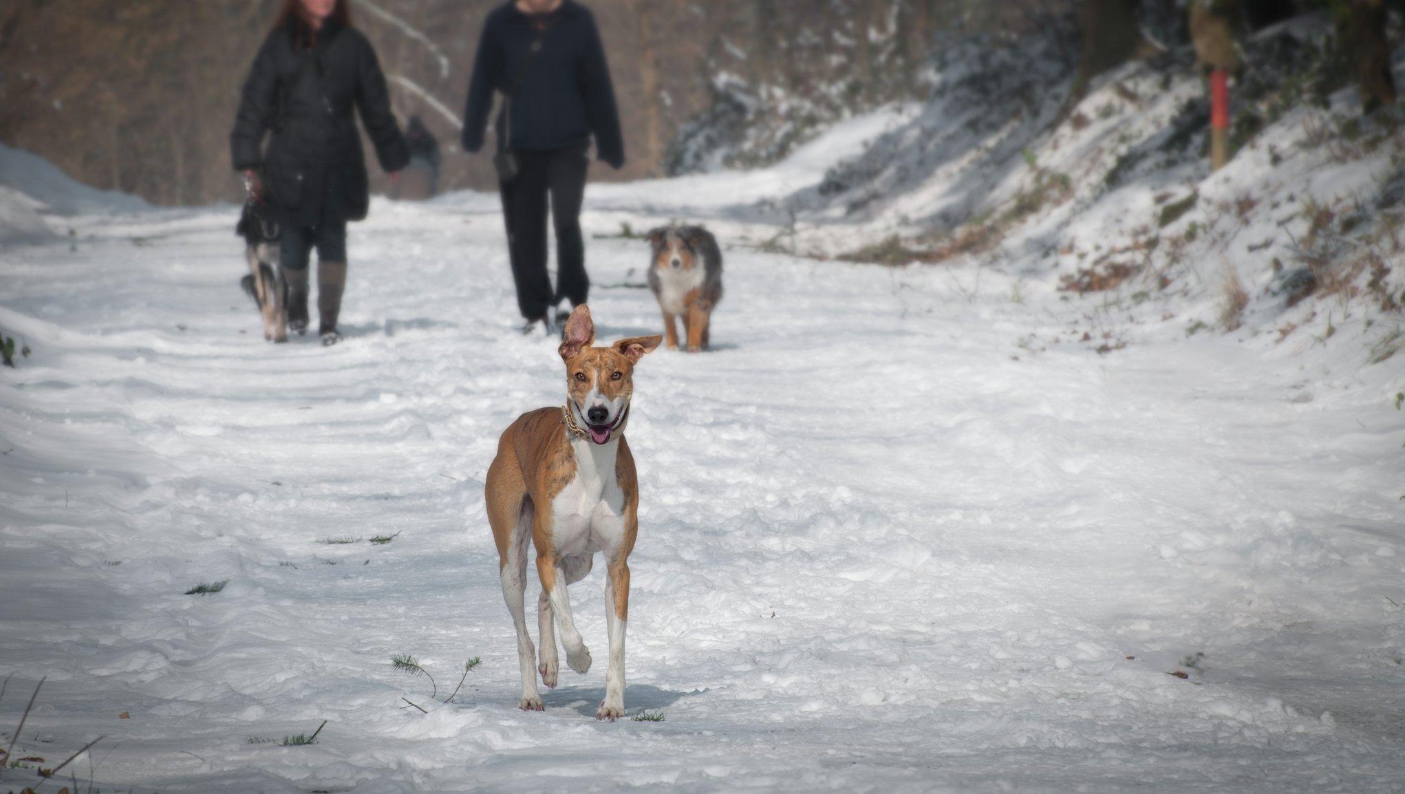 Hundar & vinter