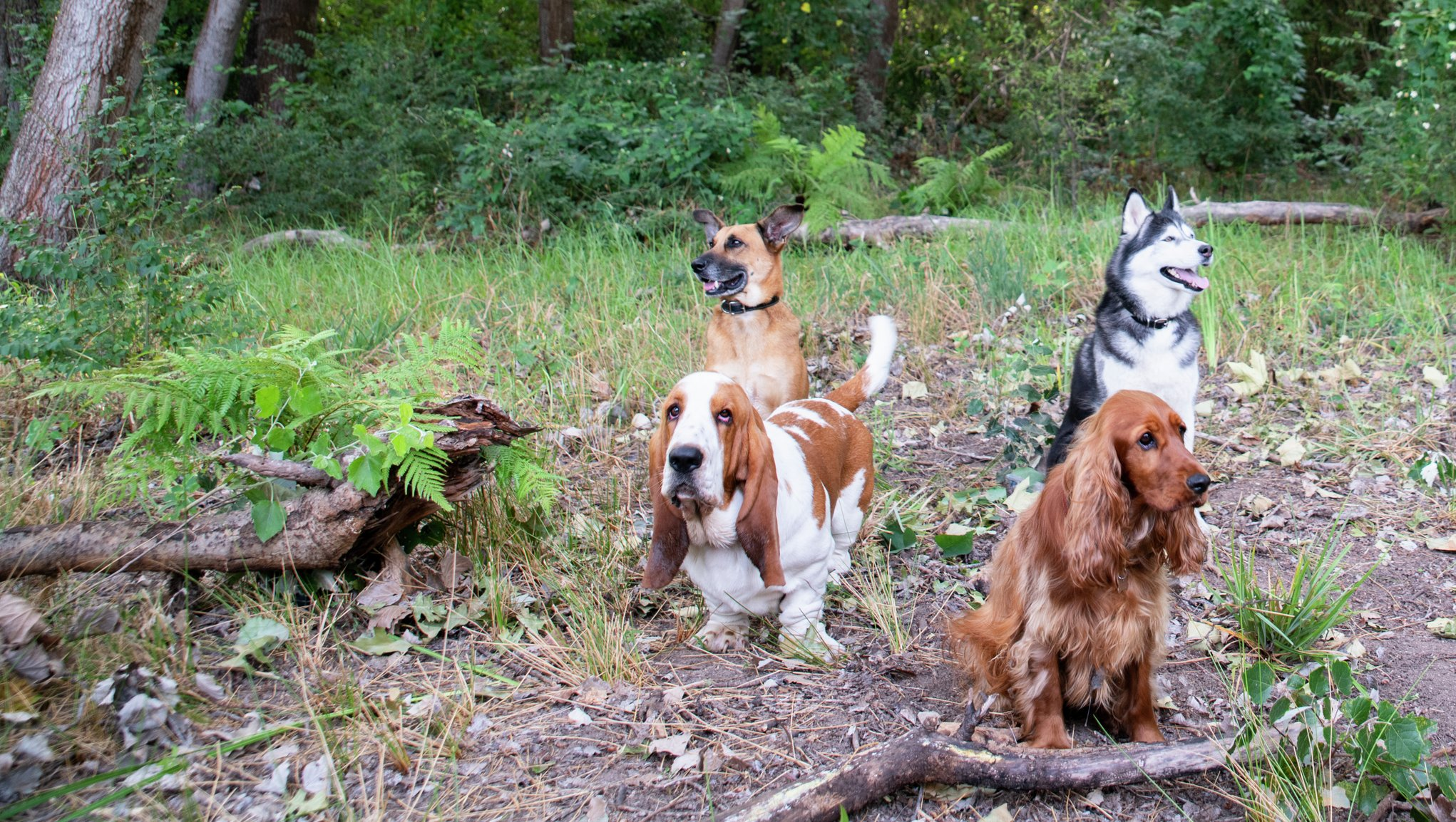 Hundälskare