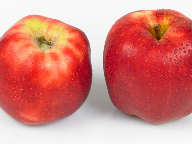 norsk eple rød gravenstein