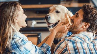 En man och kvinna stryker en hund