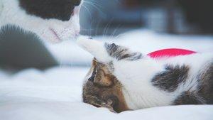 Kattunge leker med mamman
