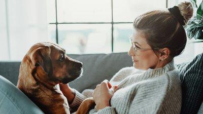 Hundkontakt