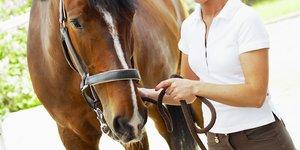 brun häst och hästägare