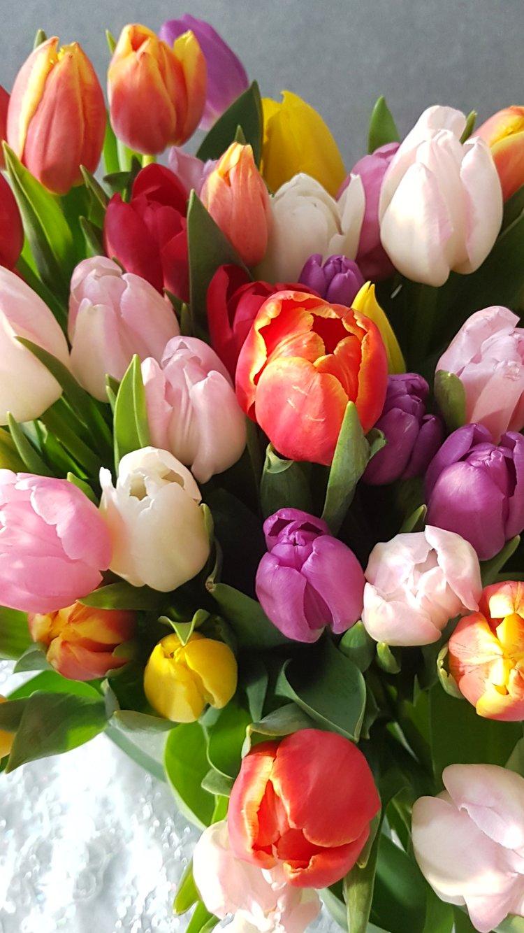 Bukett med tulipaner