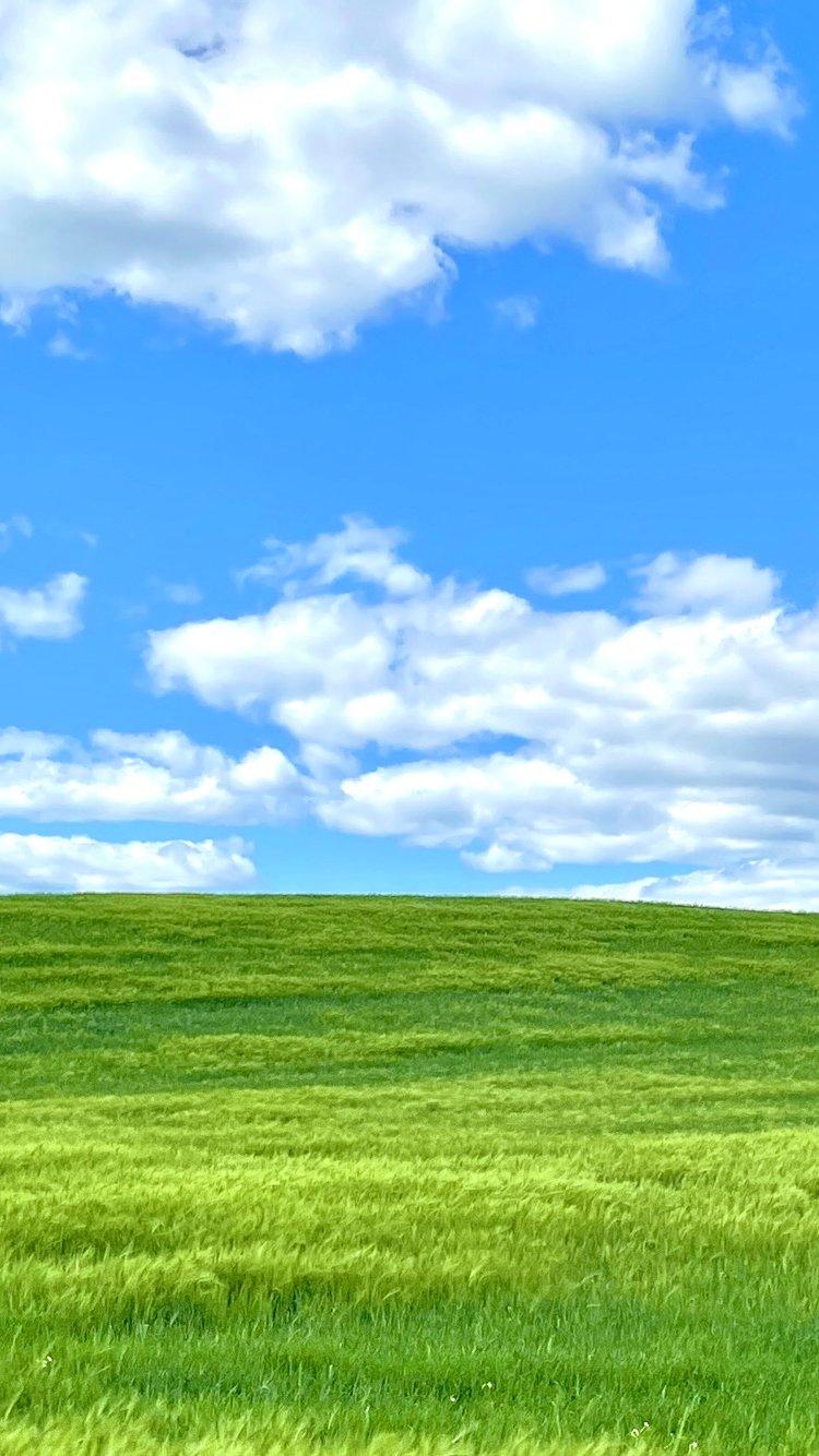 Grønt landskap