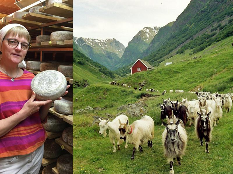 Anna Karine Marstein med osten Kvit Undredal og geiter fra stølsysteriet i Undredal