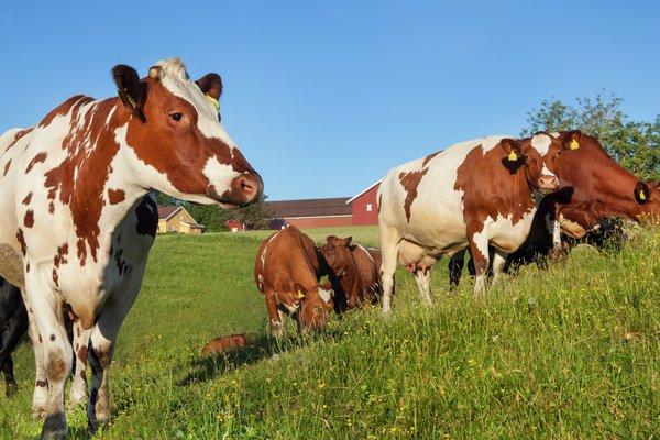 Ny strategi for dyrehelse i Norge