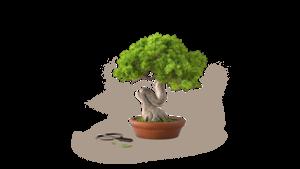 Страхование леса