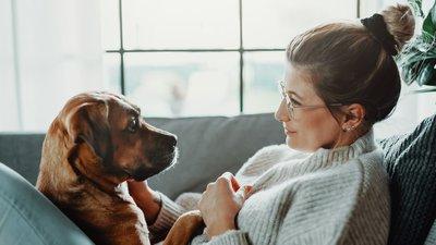 Hund och kvinna i soffa