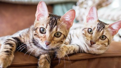 Katter i soffan
