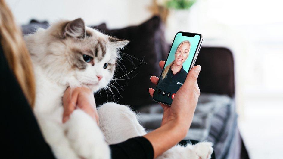 FirstVet för katt