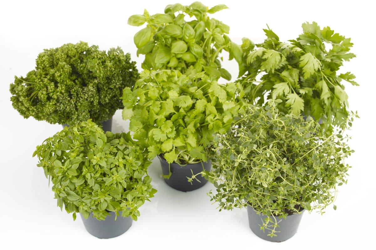 Flere typer urter i potte