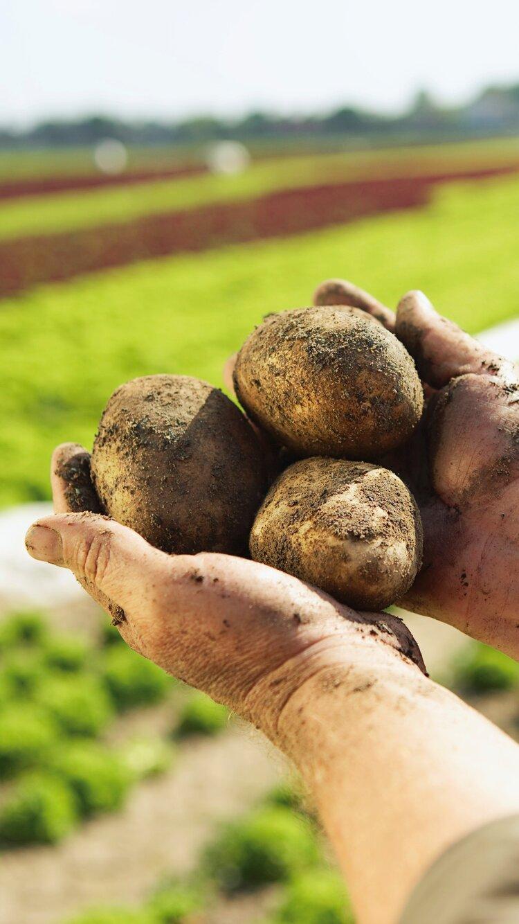 Norske poteter