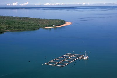 Barramundi sea farm