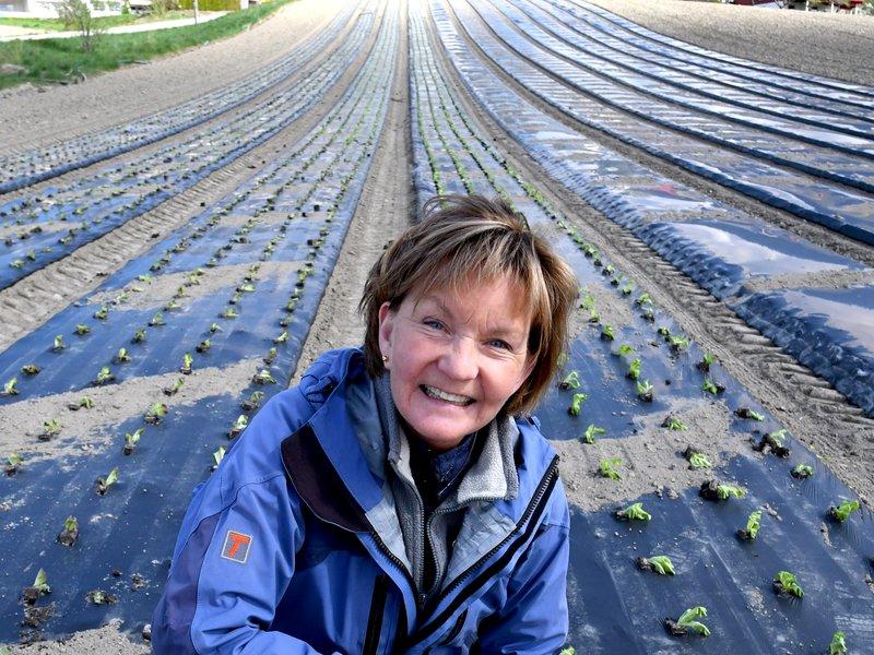 Grønssaksdyrking: Pernille viser grønssakssenger. Her dyrkes blomkål. Traktor med GPS under våronna gir perfekte beder og senger til grønnsaker.