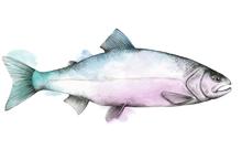 Prime & Express fisk