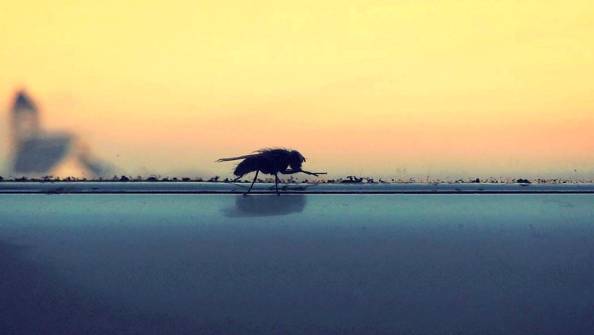 Fluga i fönstret