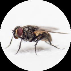 Insektmel i fôr