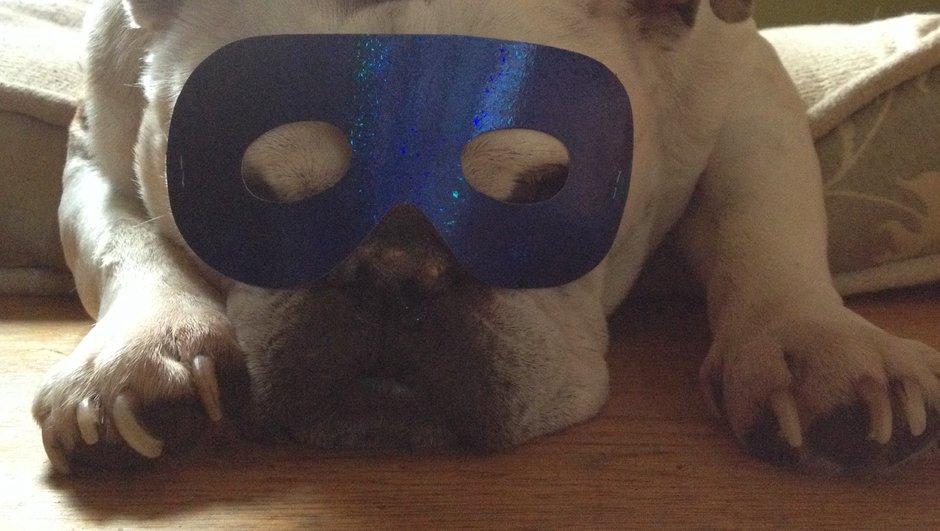 Hund iklædt nytårshat og -maske.