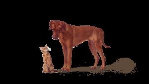 Forsikring for dyr
