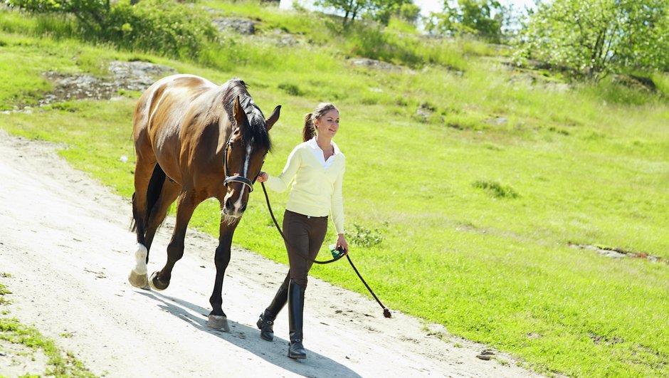 Rastning av hästen