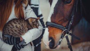 Häst och katt
