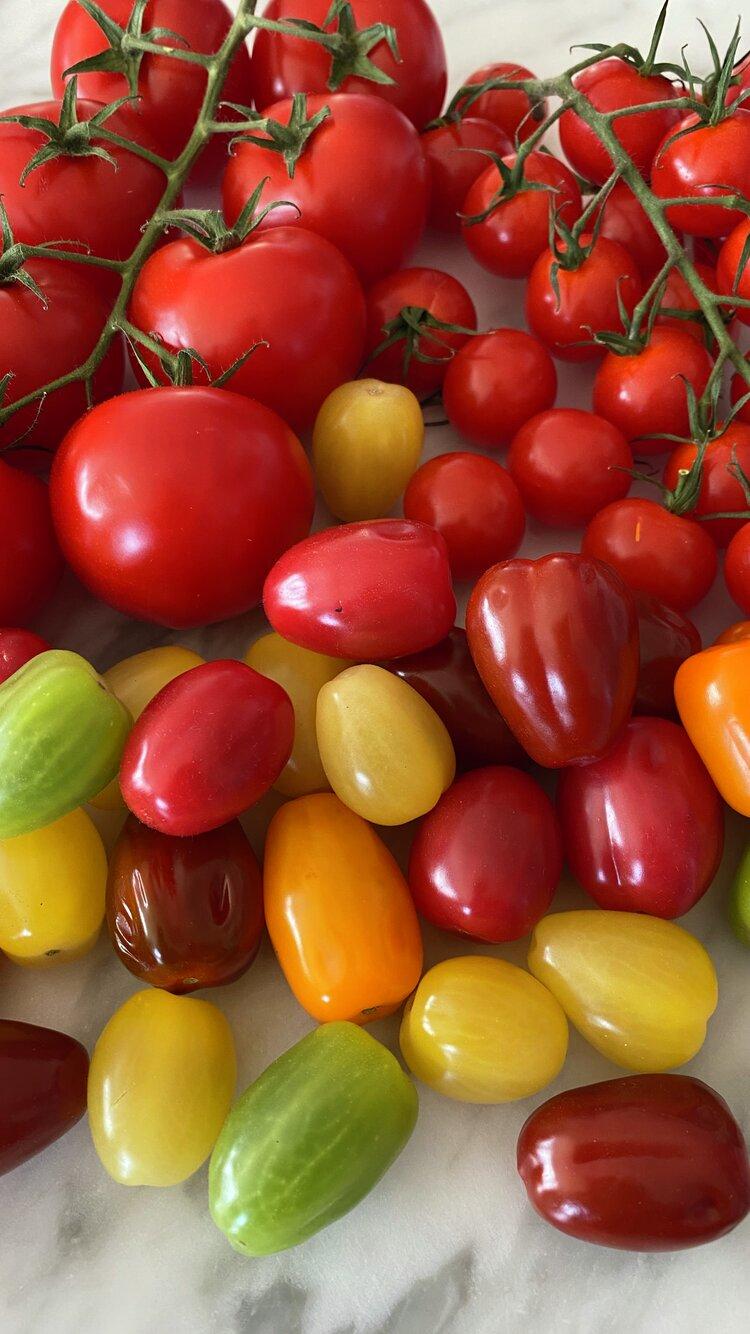 Norske tomater