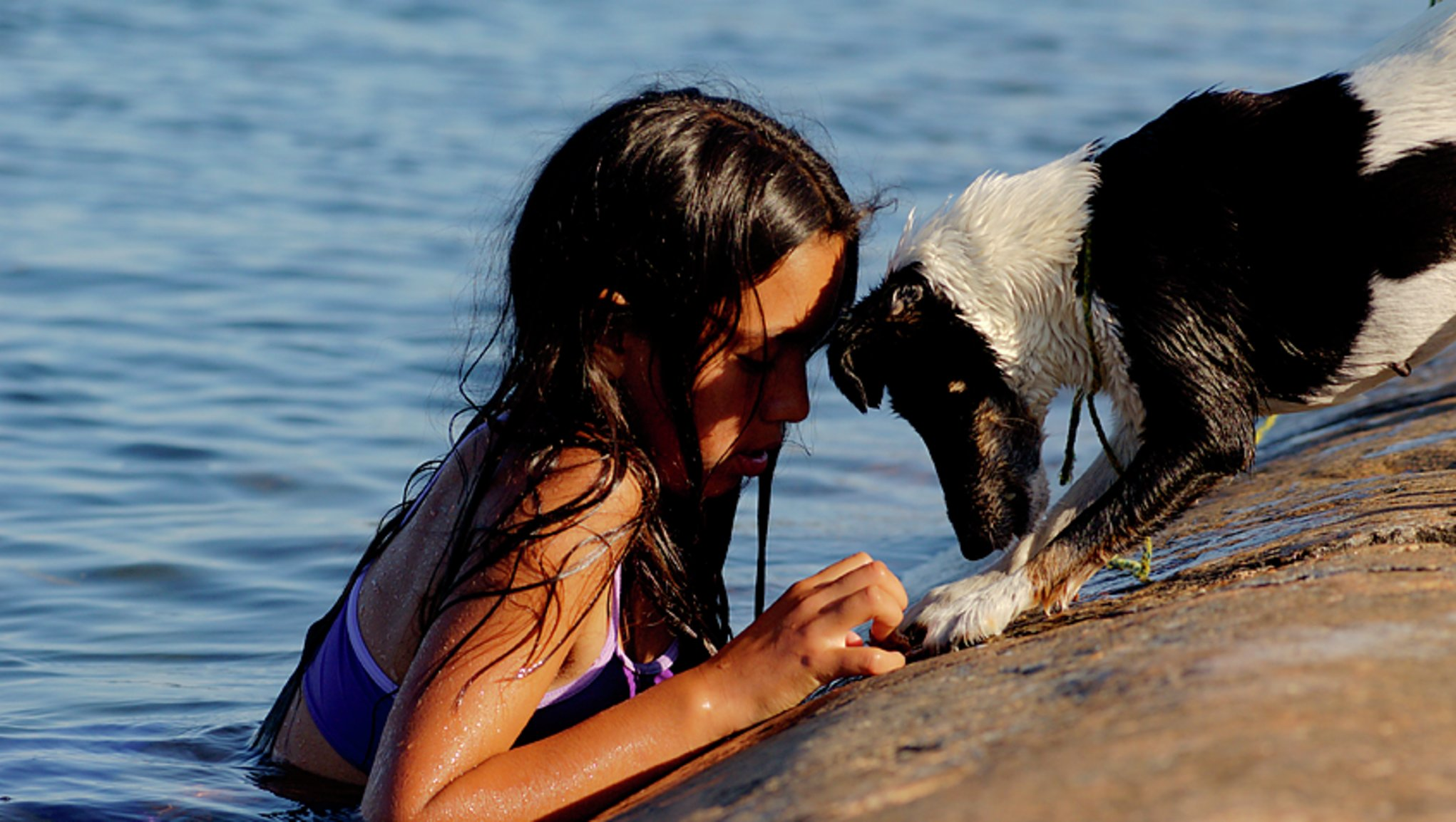 Skydda din hund