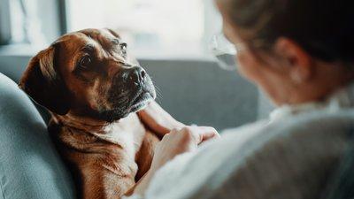 Padomā, kā suns jutīsies visu ceļojuma laiku