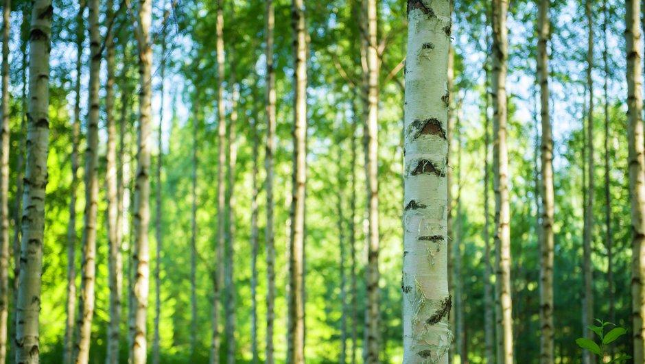 Metsakindlustus aitab ilmastiku ja ulukite tekitatud kahju korral