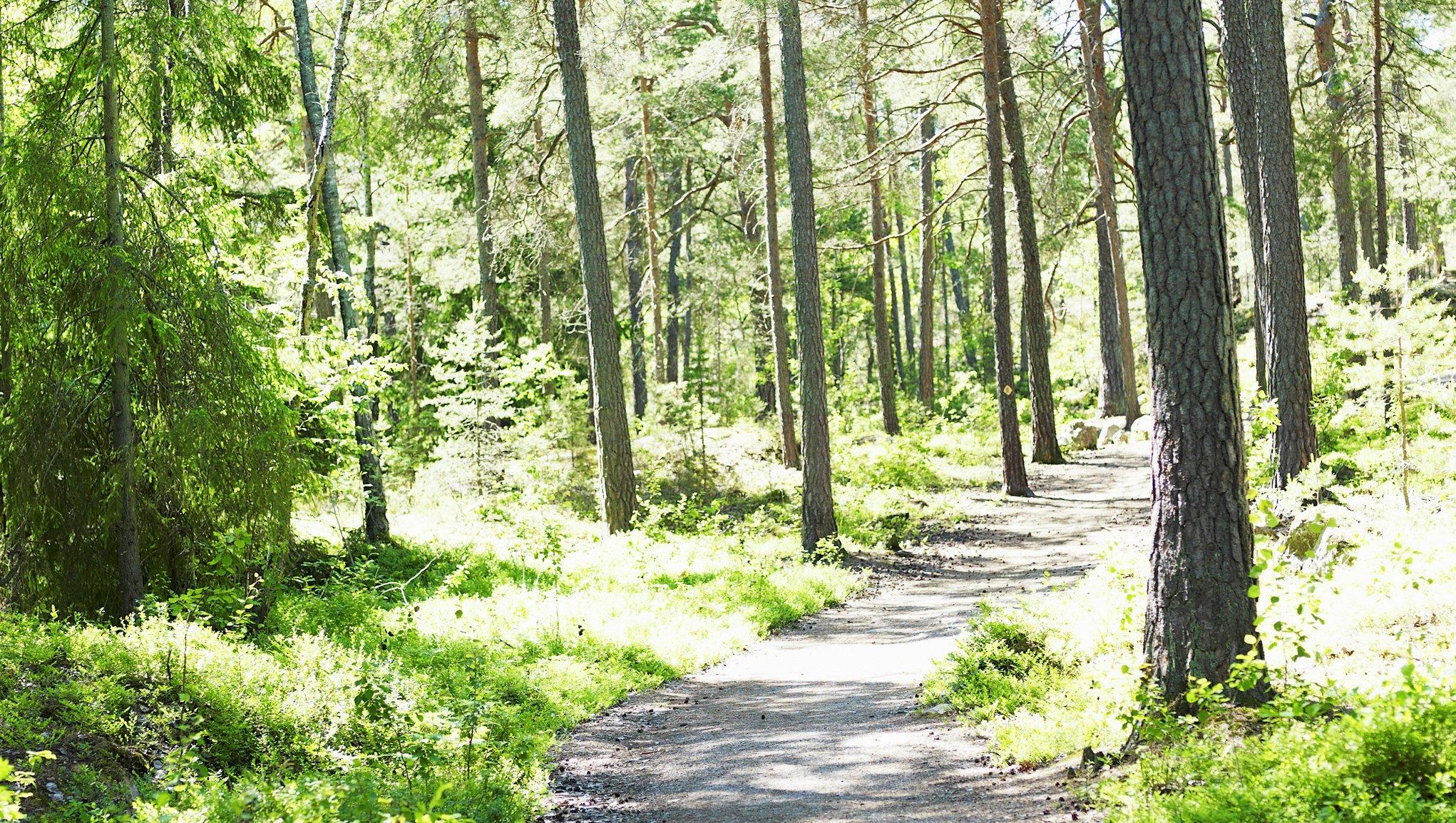 Skogsförsäkring