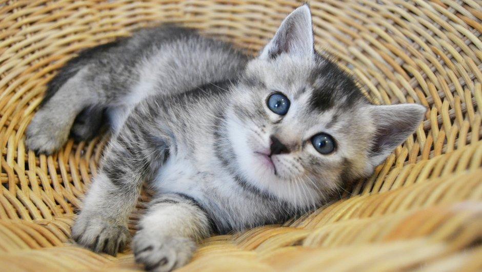 Kattunge i korgstol