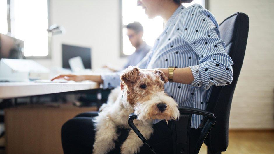 Hund med på jobbet