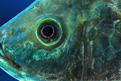 Skretting - The global leader in aquaculture feed