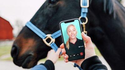 häst och mobil