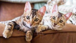 Kattungar i soffan