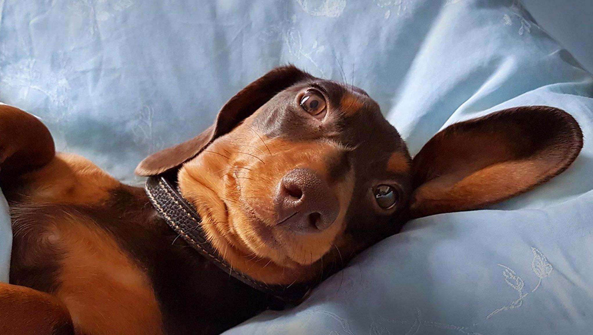 Koiravakuutus