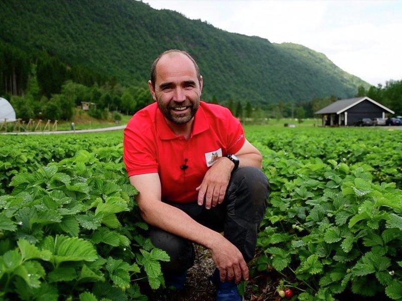Det er ikke bare bare å være jordbærdyrker. Det er høyrisiko forteller bonde Jan Ole Fuglem i Valldal