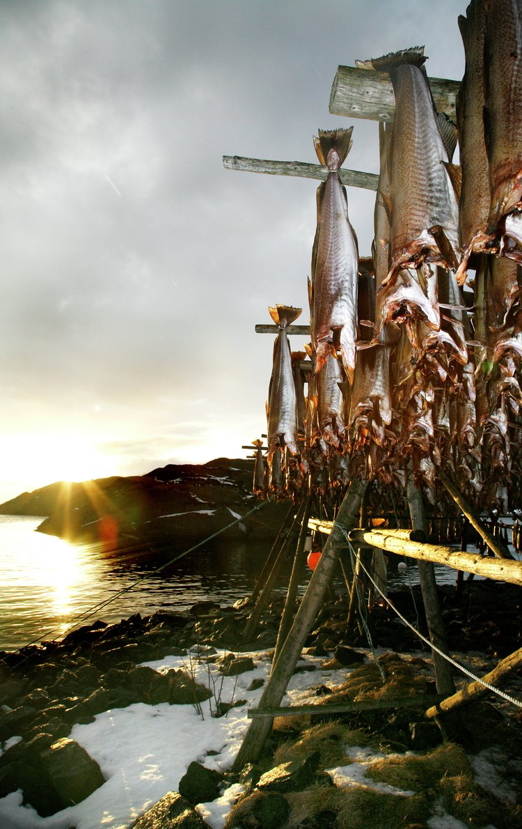Tørrfisk fra Lofoten. Foto: Eivor Eriksen