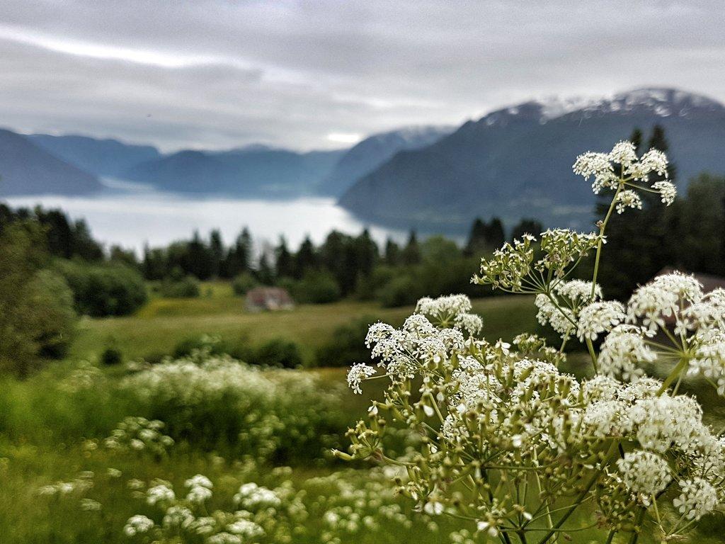 bilde av blom, fjord og fjell i bakgrunnen