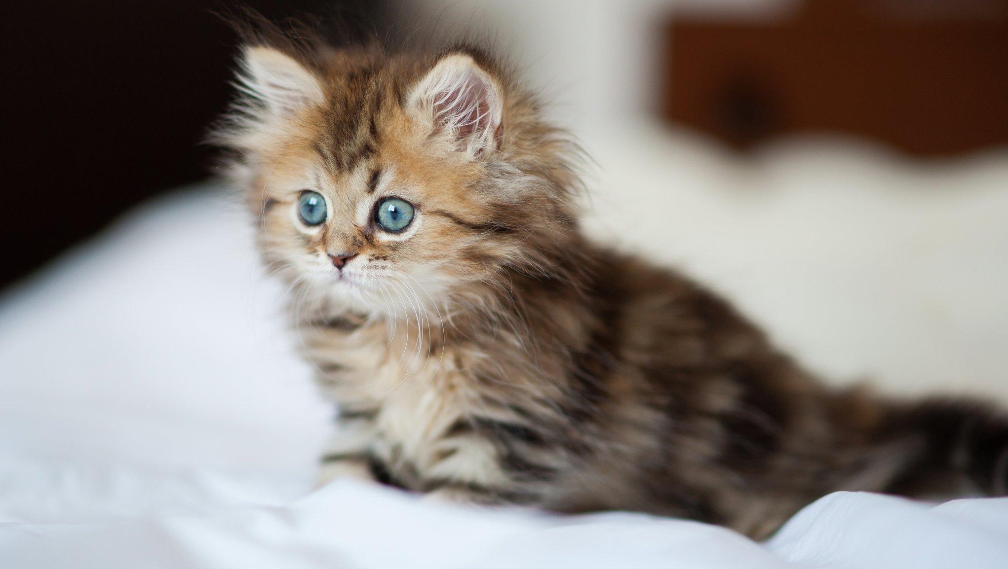 Kattunge på sängen