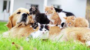 hund och katter