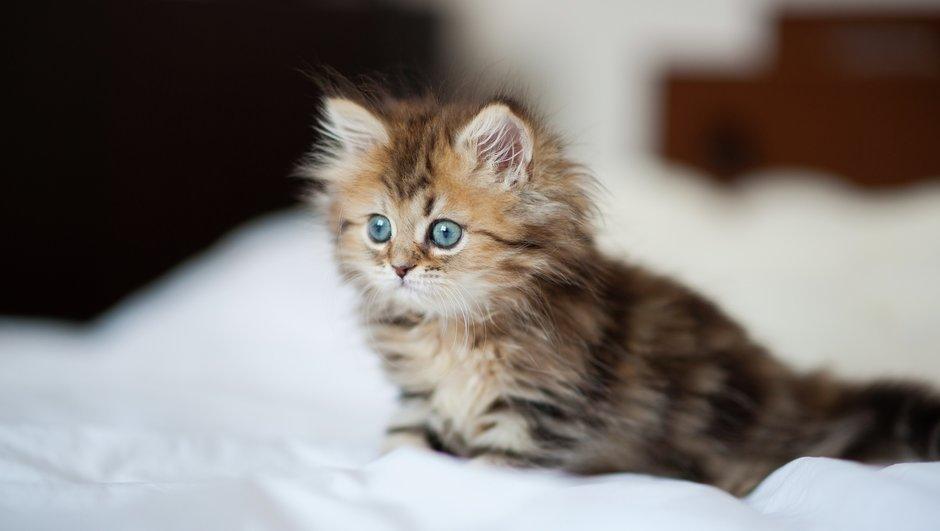 Kattunge i sängen