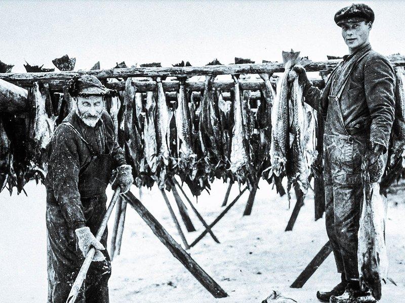 Halvors Boknafisk lages av tørrfisk fra Lofoten
