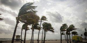 Palmuja kovassa tuulessa rannalla